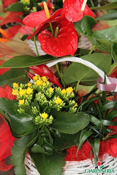 Piante e fiori 1 giardineria for Piante e fiori