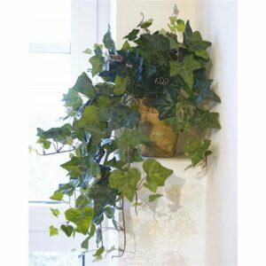 Cadente d'edera in vaso cm 50 verde.