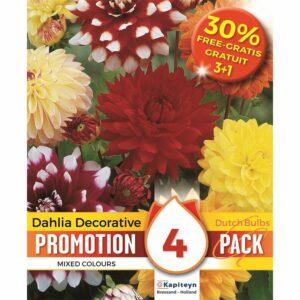 Promo dahlia decorative mix + 30% free (3 + 1 bulbs) 4 pz.